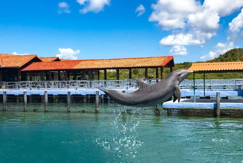 Delfinhopp ut ur vattnet i vattnet parkerar arkivfoto