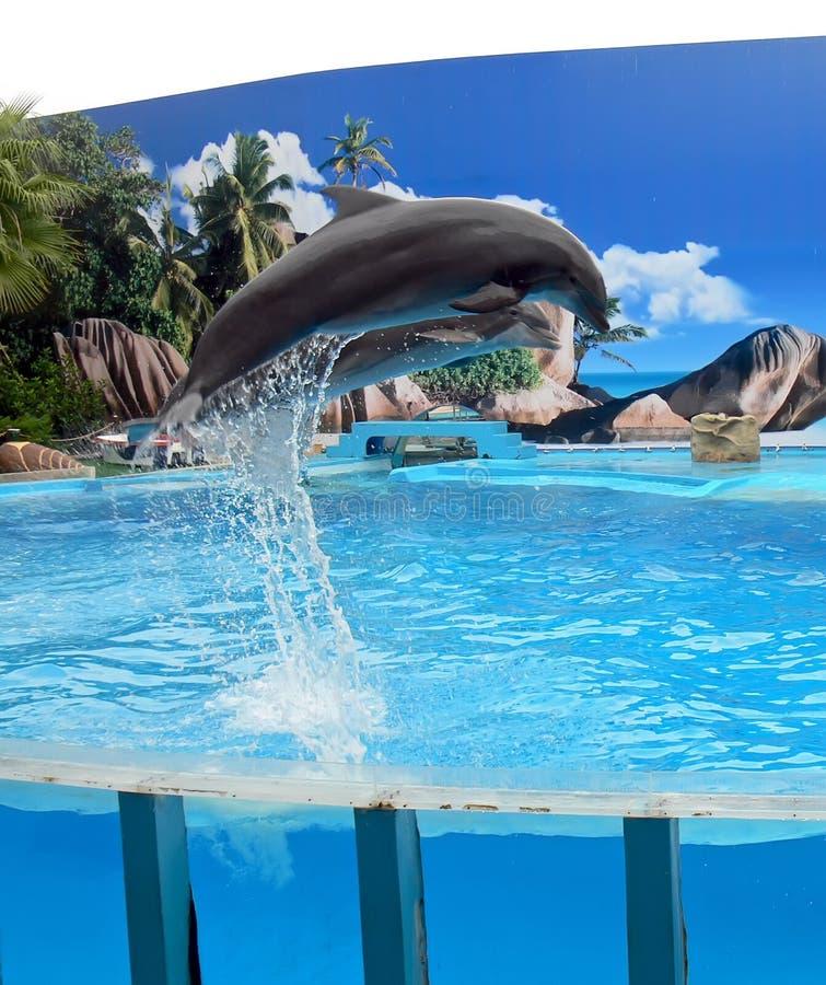Delfini di salto fotografia stock libera da diritti