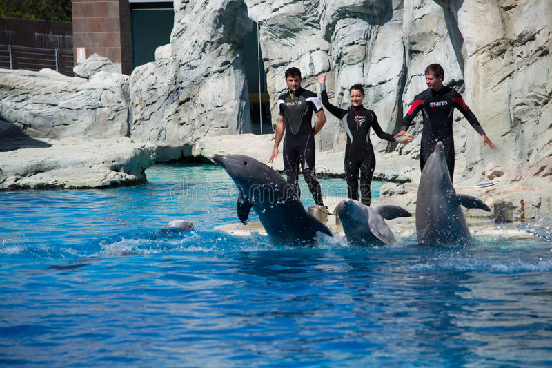 Delfini ed addestratori immagine stock