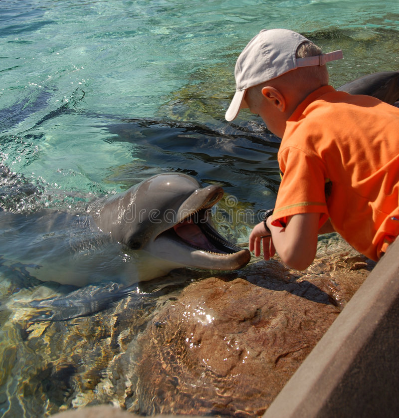 Delfino immagine stock libera da diritti