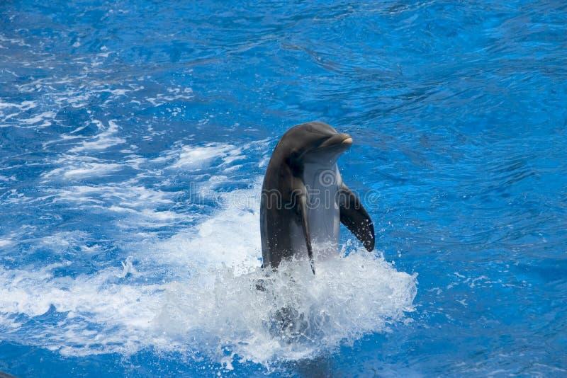 Download Delfino immagine stock. Immagine di oceano, snello, onda - 204897