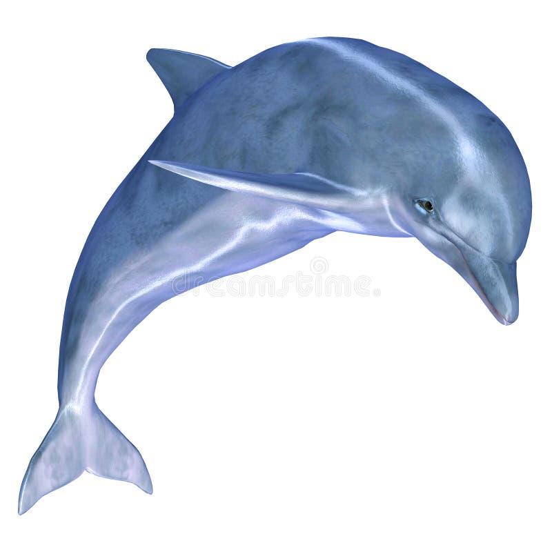 Delfino royalty illustrazione gratis
