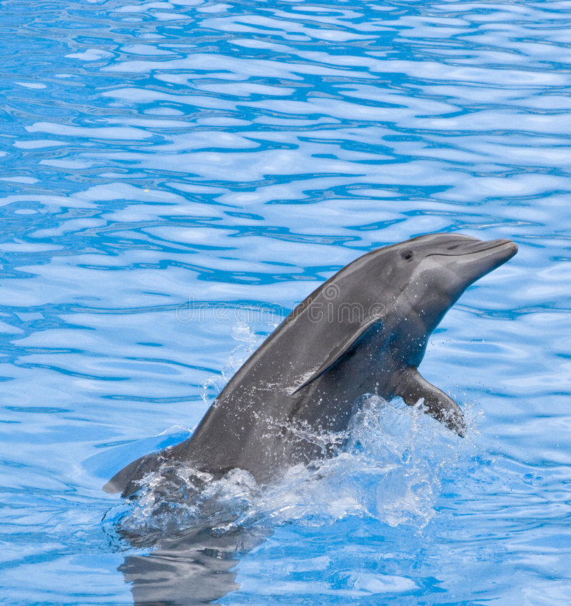 Delfino immagini stock