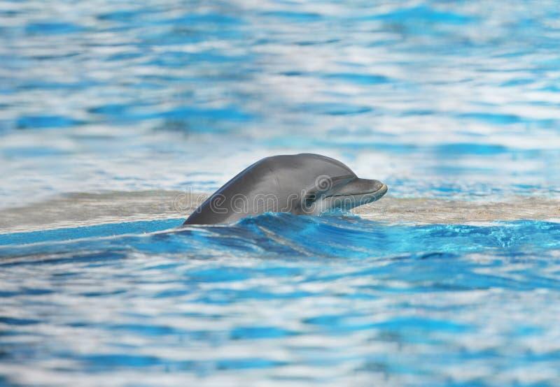 Download Delfino immagine stock. Immagine di oceano, potenza, amico - 7301311