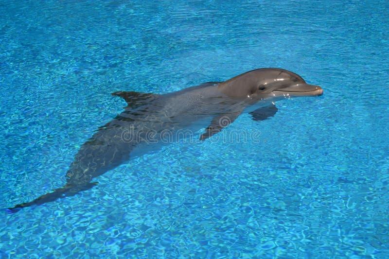 Delfino caro immagine stock