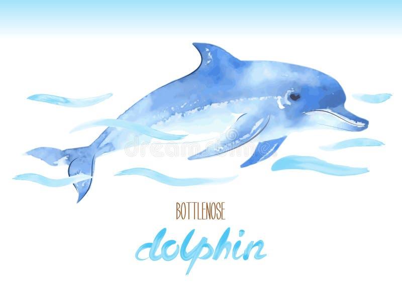 Delfino di Bottlenose Illustrazione disegnata a mano dell'acquerello di vettore royalty illustrazione gratis
