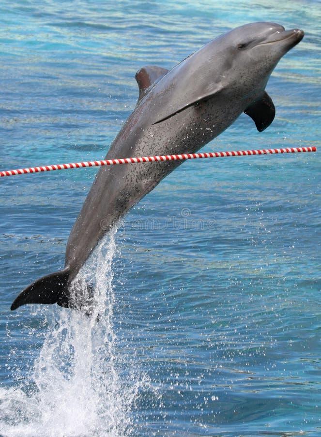 Delfino di salto fotografie stock