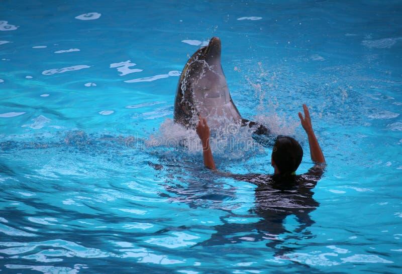 Delfino ed addestratore immagine stock