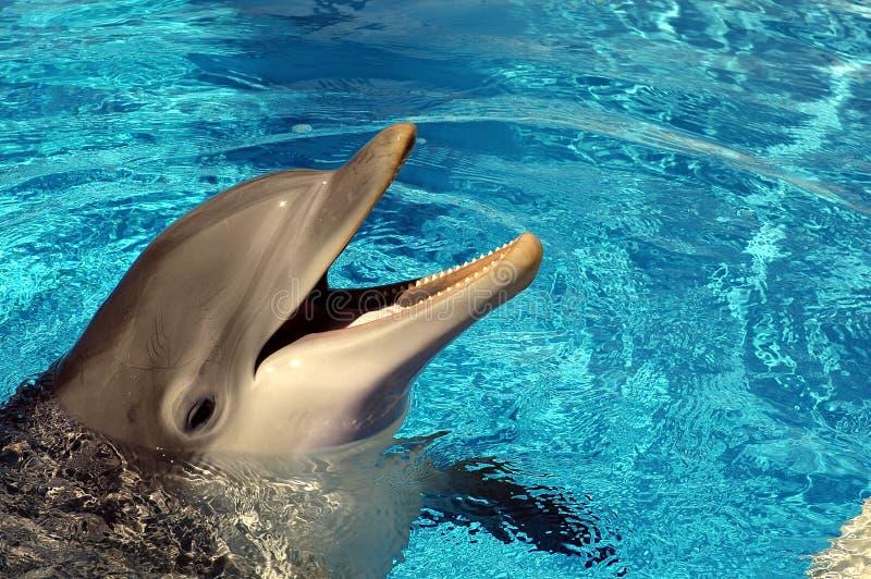 Delfino nel raggruppamento dell'hotel fotografia stock libera da diritti