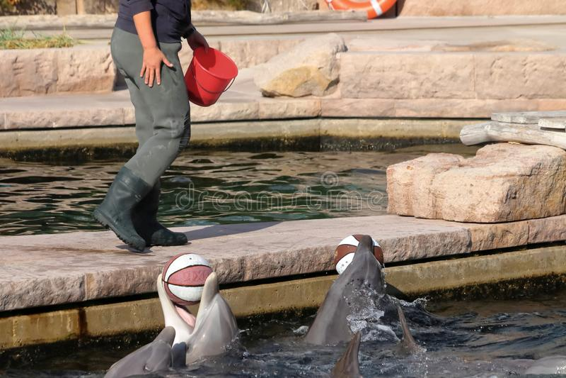 Delfin in zoo in germany in nuremberg. royalty free stock photos