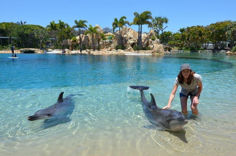 Delfinshow i havsvärlden Gold Coast Australien royaltyfria foton