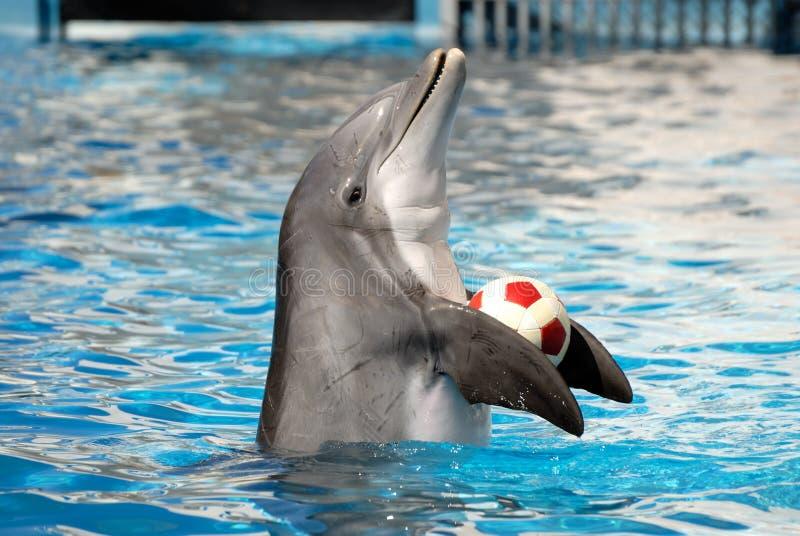 delfinu bawić się zdjęcie royalty free