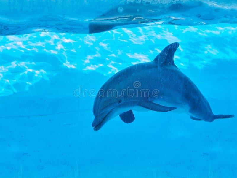 delfinu dopłynięcia underwater zdjęcia royalty free