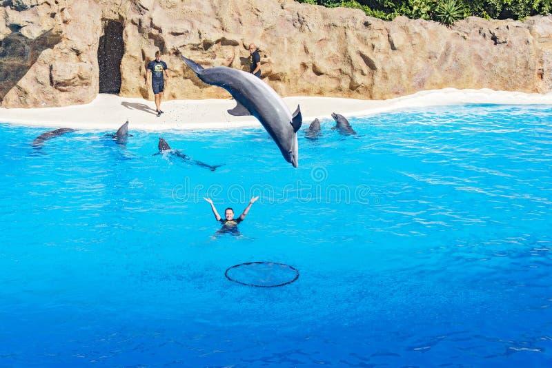 Delfinu doskakiwanie prosto z wody i nury w obręcz zdjęcie royalty free