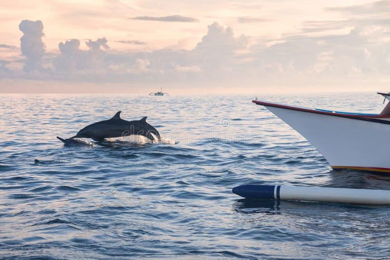 Delfinu doskakiwanie w delfin plaży Lovina, Bali obrazy royalty free