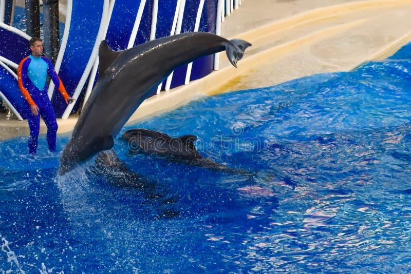 Delfinu doskakiwanie w kolorowym delfinu dnia przedstawieniu; Ja jest ?wi?tecznym ?wi?towaniem nasz naturalny ?wiat przy Seaworld zdjęcia stock