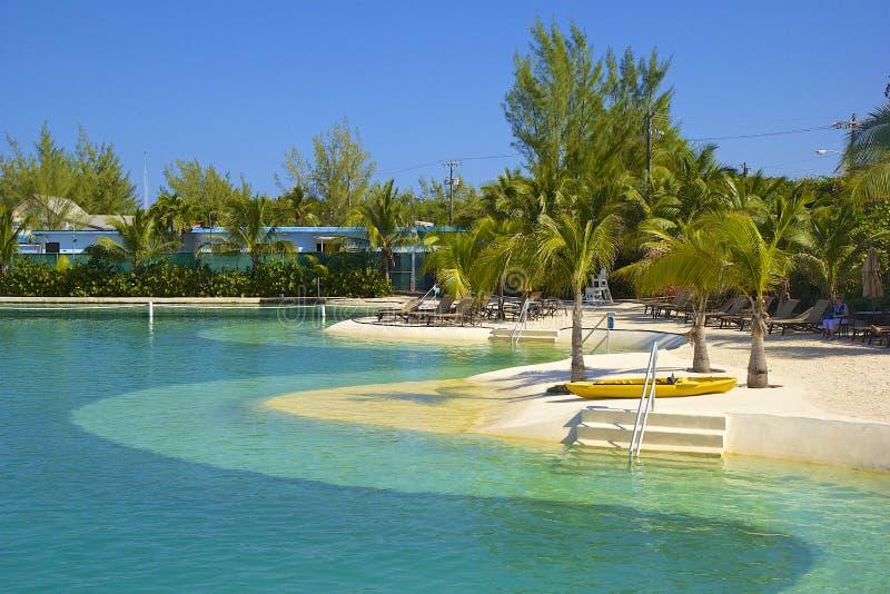 Delfinu miejsce w Grand Cayman fotografia royalty free