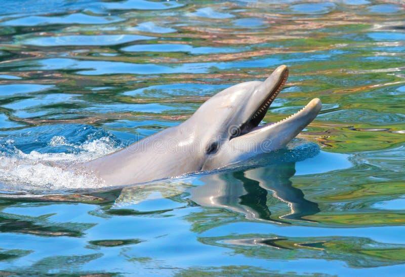 Delfinu ono uśmiecha się fotografia royalty free