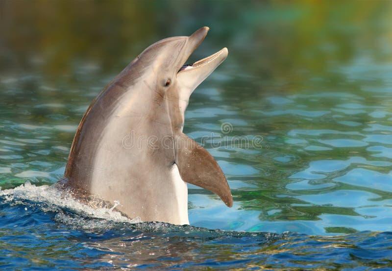Delfinu ono uśmiecha się obraz royalty free