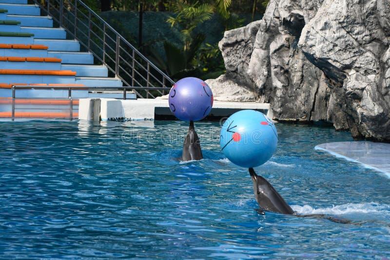 Delfinu przedstawienia Bangkok miasta safari ?wiat zdjęcia royalty free
