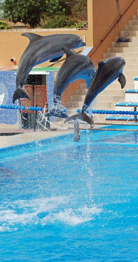 delfinu przedstawienie zdjęcia stock