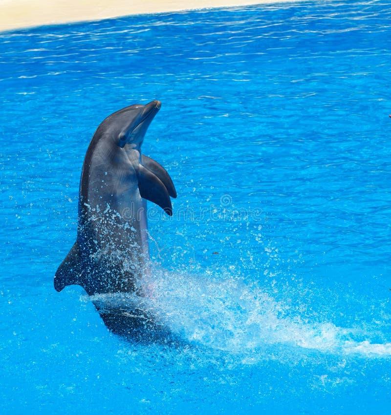 Delfinu rodzinny przeskakiwać z jasnego błękita zdjęcia royalty free
