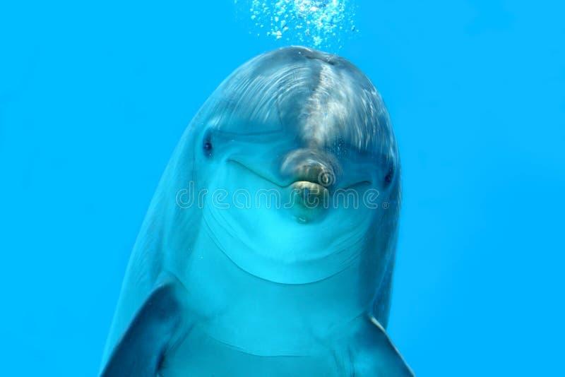Delfinu Spojrzenie obraz royalty free
