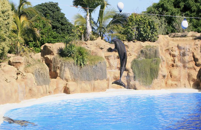 Download Delfinu utrzymanie w zoo zdjęcie stock. Obraz złożonej z drapieżnik - 106918388