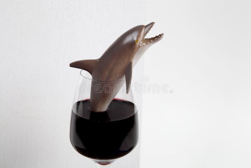 Delfinu wina szkło obrazy royalty free