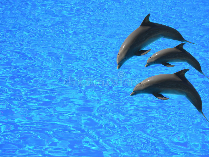 delfiny 3 obrazy royalty free