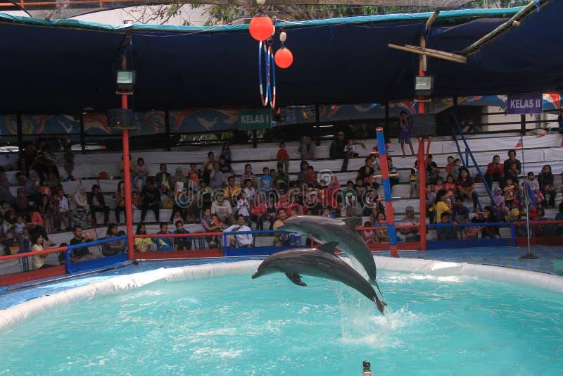 delfiny obrazy stock