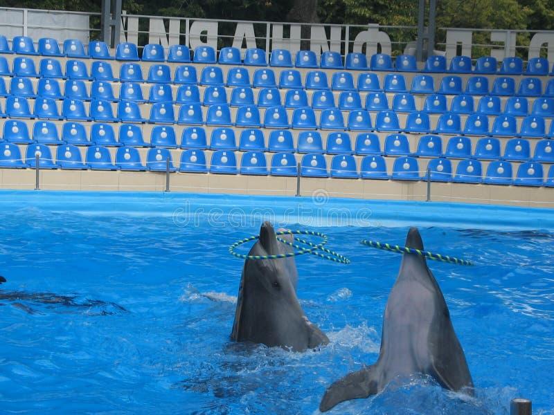 delfiny obrazy royalty free
