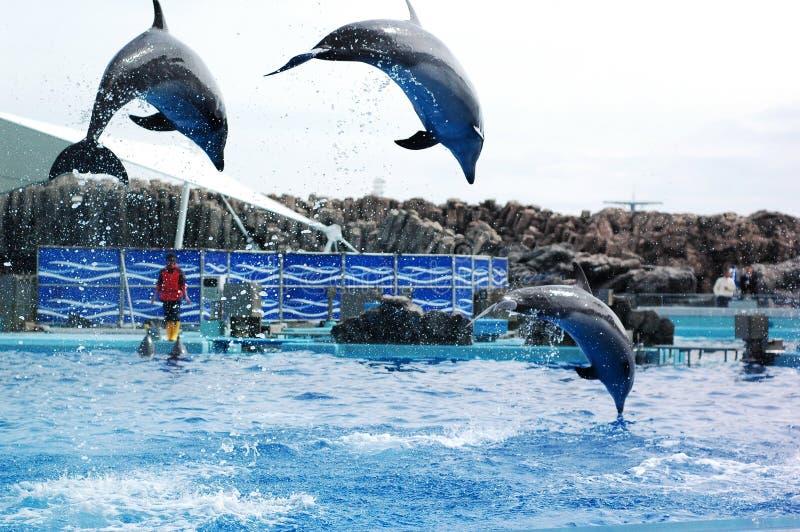 Delfiny przy portem Nagoya społeczeństwa akwarium obrazy royalty free