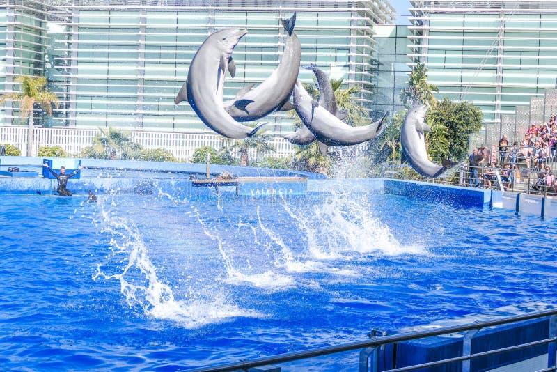 Delfiny skacze przed dużą publicznością obraz royalty free