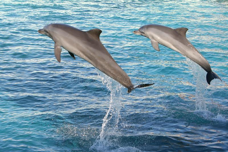 delfiny target2018_1_ dwa fotografia royalty free