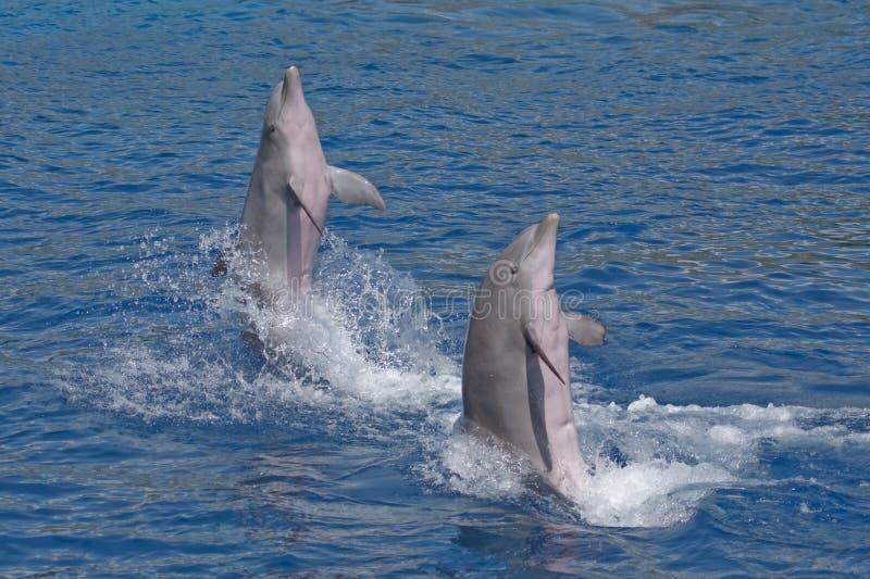 delfiny target2157_1_ woda wodę dwa fotografia royalty free