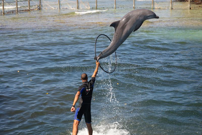 Delfiny w dolphinarium w mangrowe morzem zdjęcie stock