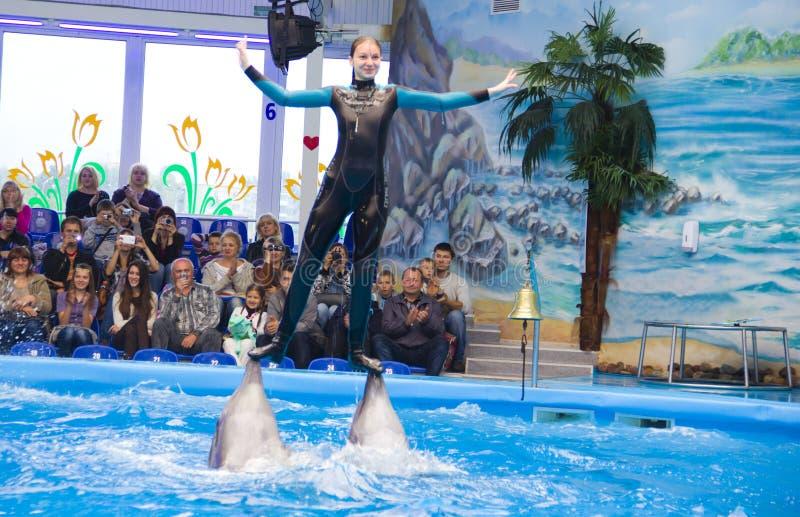 Delfiny z trenerem zdjęcia stock
