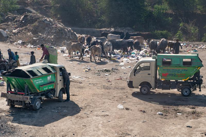 Delhi/India-25 02 2019: Die Kuh bereiten Kreisprozeß auf lizenzfreies stockfoto