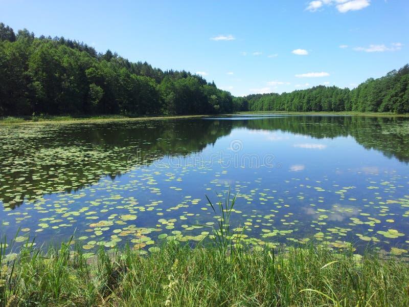 """Deliai do prÅ do alieji do ½ do lago Å """"(Lituânia) foto de stock royalty free"""