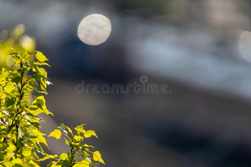 Deliberately blurred background with a small branch of a birch tree with fresh green leaves focused in the corner of the stock image