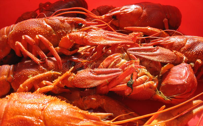 Delicacies from the sea royalty free stock photography