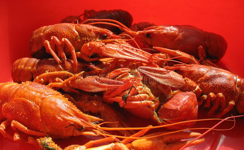 Delicacies from the sea royalty free stock images