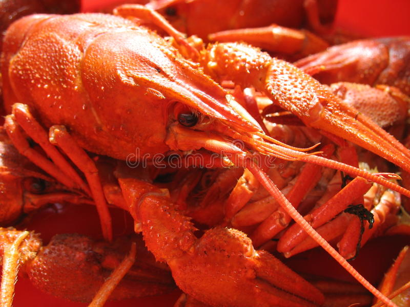 Delicacies from the sea royalty free stock image