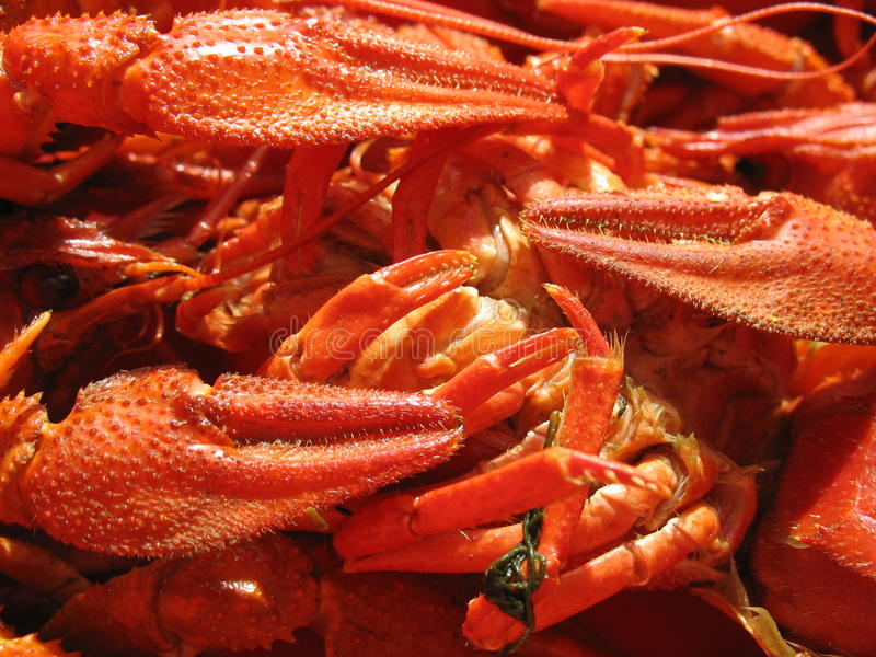 Delicacies from the sea stock photo