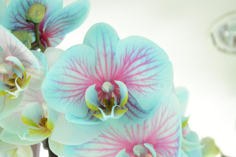The delicacy of an orchid royalty free stock photos
