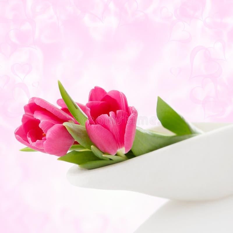 Delicadamente tulips antes do fundo brilhante fotos de stock royalty free