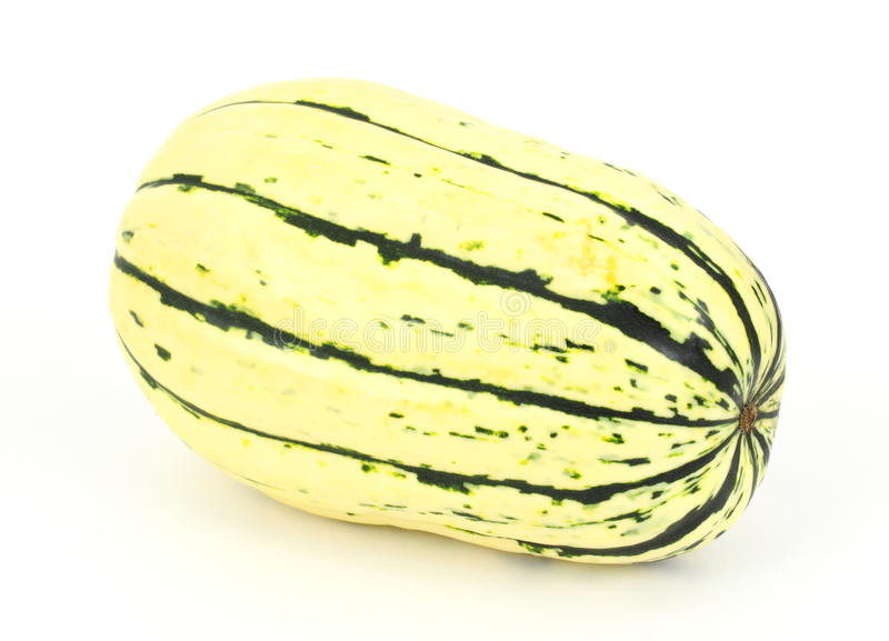 Delicata squash royalty free stock photo