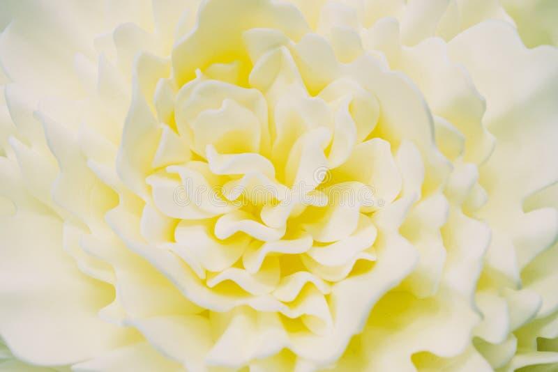 Delicatamente fiore artificiale dell'avorio fondo per qualsiasi progettazione immagine stock