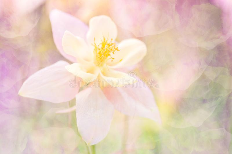 Delicate abstract flower with a texture. A flower in a warm pink tonality. Soft selective focus. Stylish background. royalty free stock photos